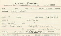 Panopeus lacustris