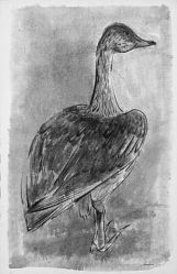 Young Gander with Beautiful Foot
