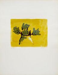 "Dum-Dum Roses (from ""New York Ten"" portfolio)"