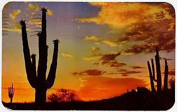 Postcard of a cactus and sunset
