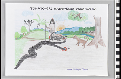 Tomatoxiri Majakykoja Kokaawera