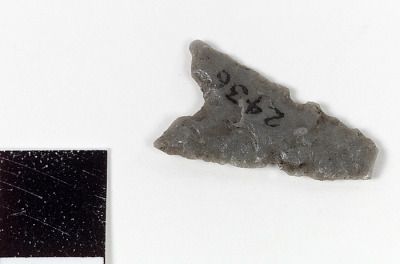 Bifacial tool/projectile point