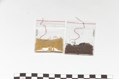 Seed/Seeds