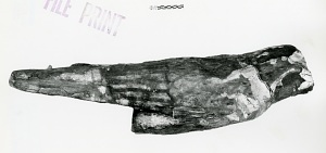 images for Falcon-Shaped Wooden Coffin, With Falcon Mummy-thumbnail 8