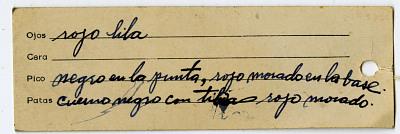 Vanellus chilensis cayennensis