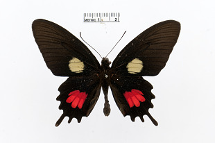 Butterflies | Smithsonian Institution
