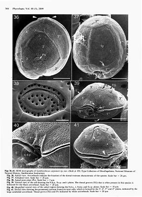 Gambierdiscus carpenteri S.R. Kibler & et al.