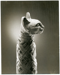 images for Mummy Of Cat-thumbnail 22