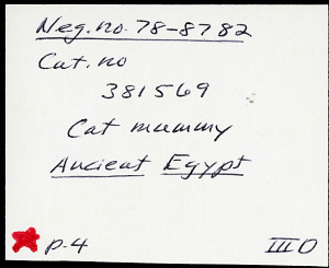 images for Mummy Of Cat-thumbnail 26