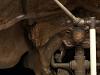 images for Triceratops horridus Marsh, 1889-thumbnail 5