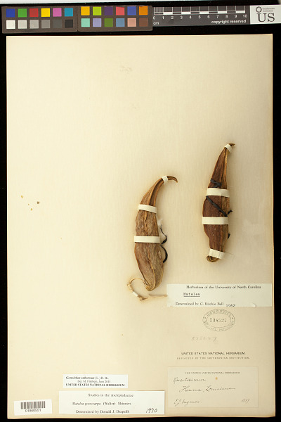 EDAN Search Results | Page 7405 | Smithsonian Institution