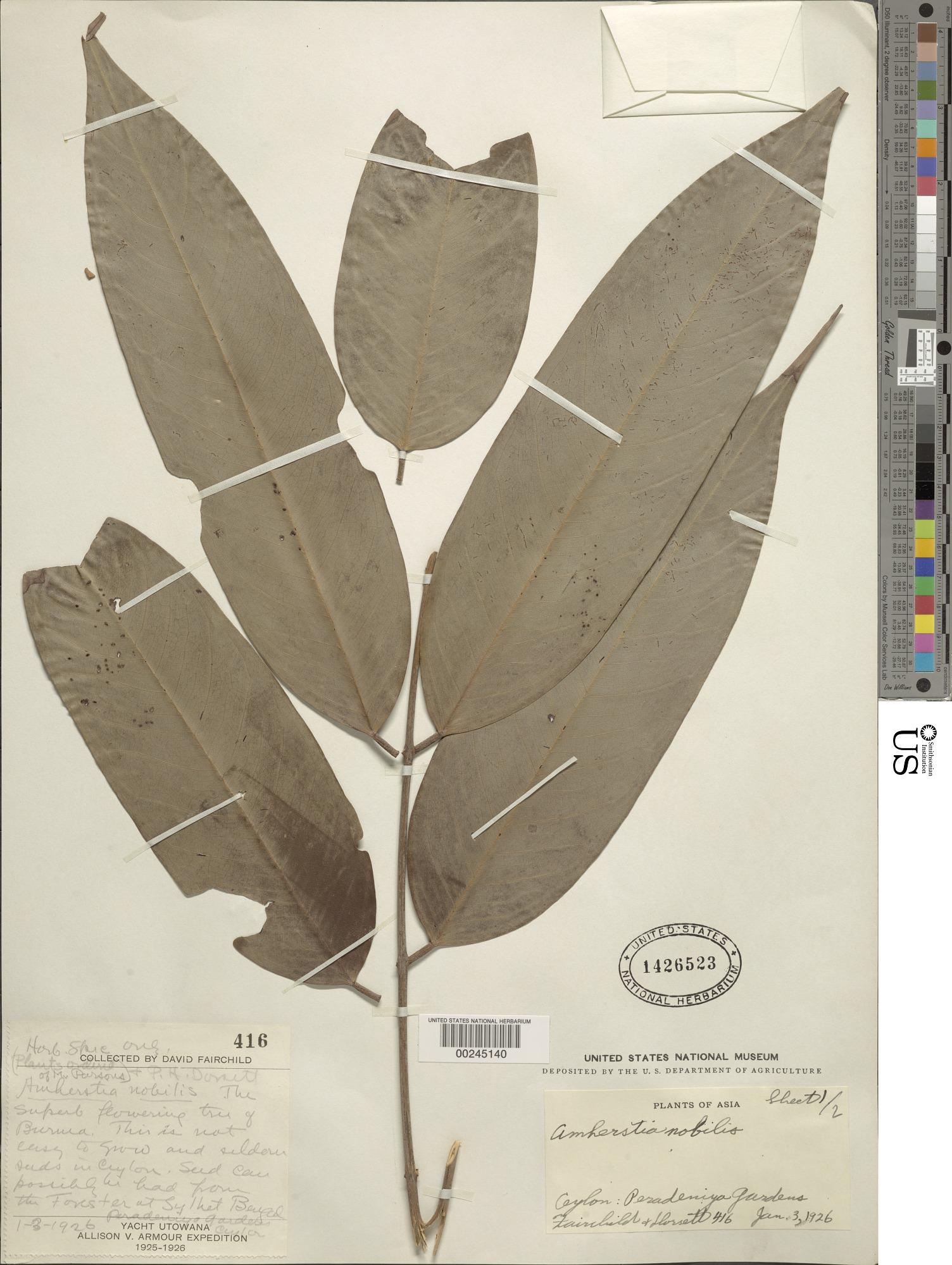 images for Amherstia nobilis