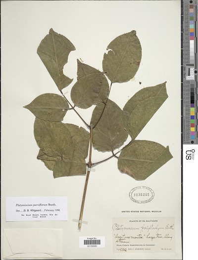 Edan Search Results Page 21357 Smithsonian Institution