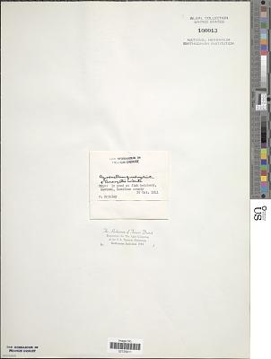 Agmenellum quadruplicatum