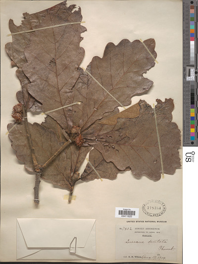 EDAN Search Results | Page 20965 | Smithsonian Institution