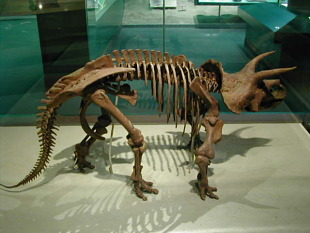 National Museum of Natural History | Smithsonian Institution