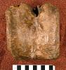 images for Creosaurus potens Lull, 1911-thumbnail 1