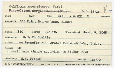 Golfingia margaritacea (Sars)