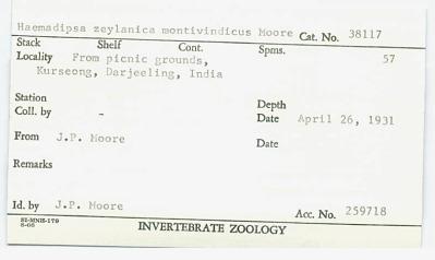 Haemadipsa zeylanica montivindicus Moore