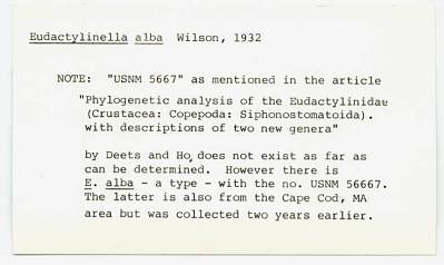 Eudactylinella alba Wilson, 1932