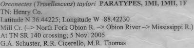 Orconectes (Trisellescens) taylori