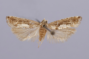 Moths   Smithsonian Institution