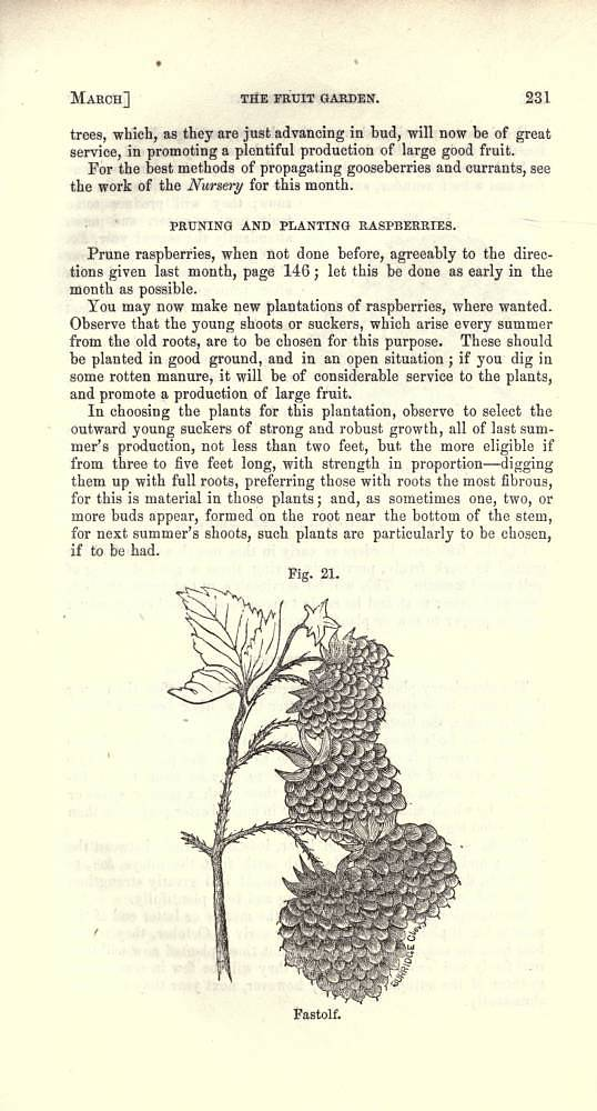 Advice to raspberry-growers, From Bernard M'Mahon, The American Gardener's Calendar