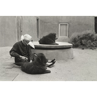 Image of Dog Grooming, Abiquiu (33 of 48)
