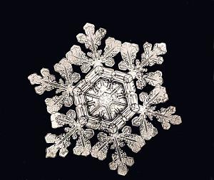 Dendrite Star Snowflake