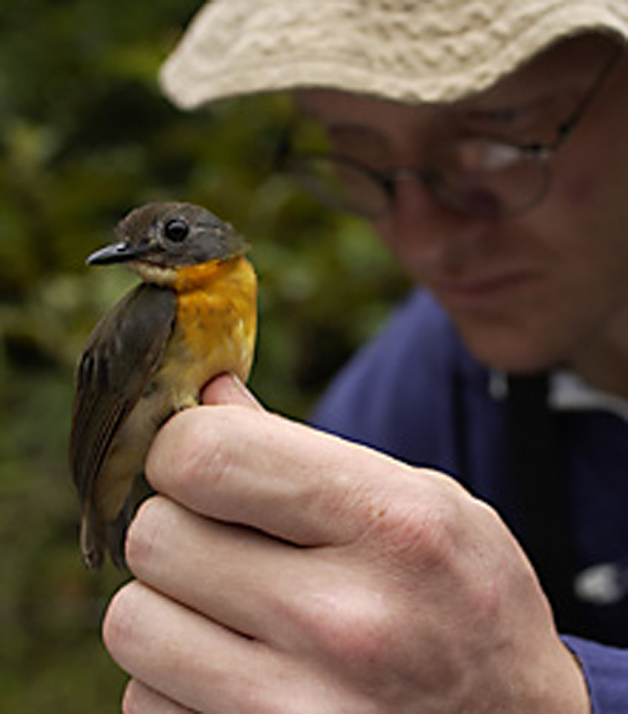 Brian Schmidt Holding an Olive-Backed Forest Robin