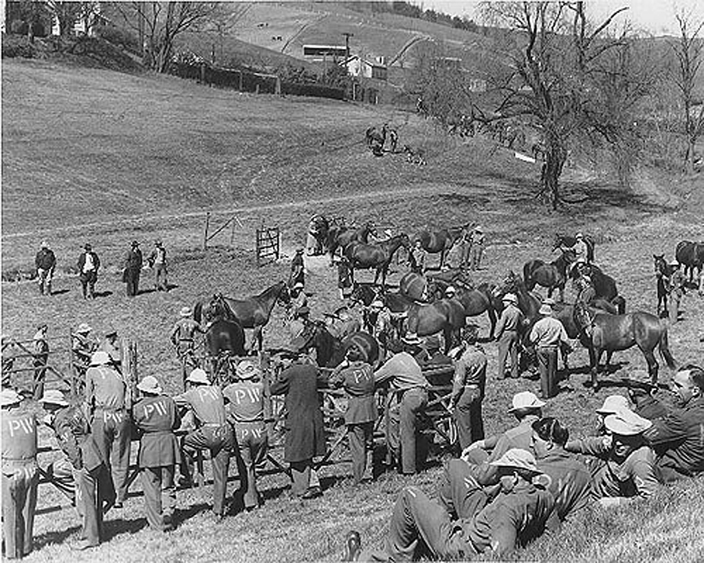 Prisoners of War at the U.S. Cavalry Remount Station