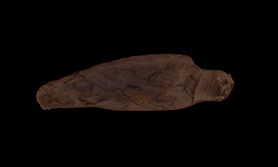 image for Wrapped Mummy Of A Kestrel