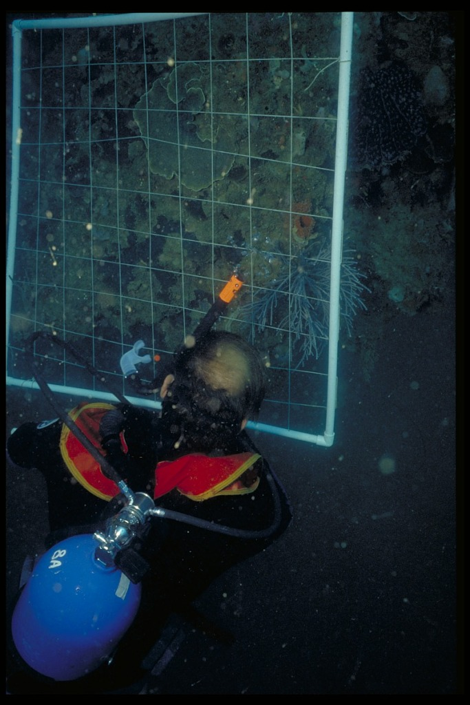 image for Underwater Research, Panama, STRI
