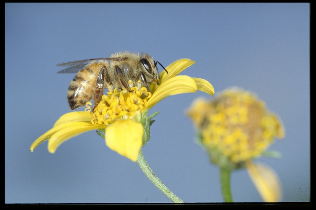image for African Bee Project with Entomologist David W. Roubik, Panama, STRI
