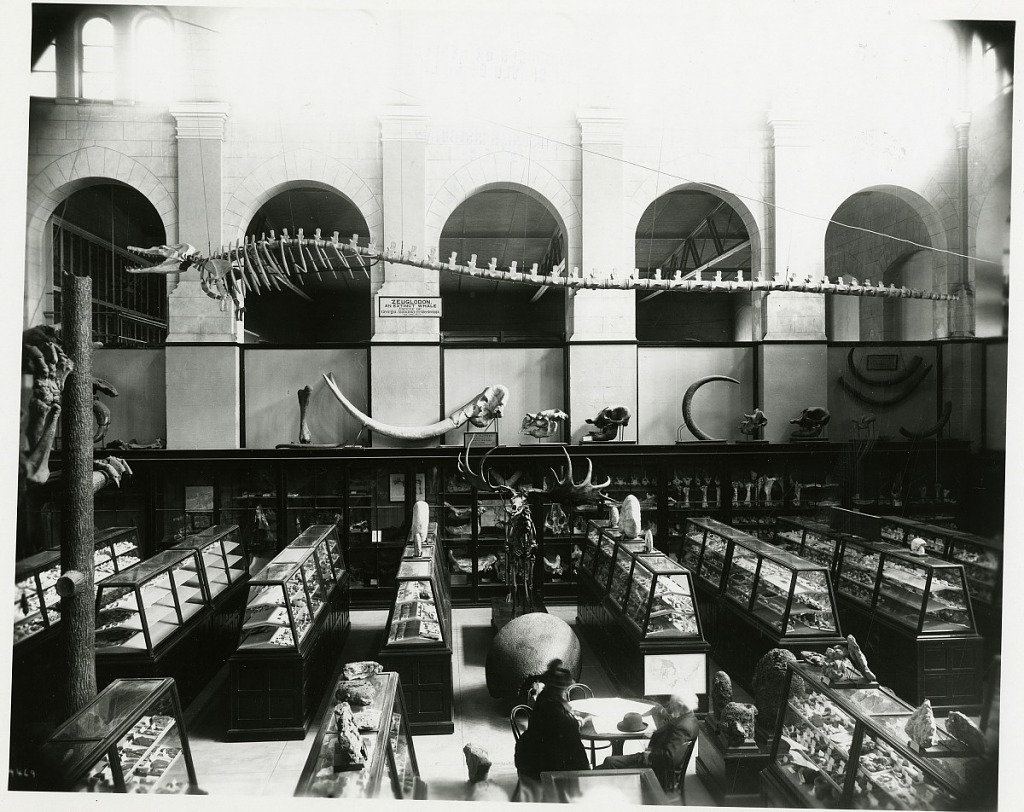 image for Arts and Industries Building, Paleontology Exhibits