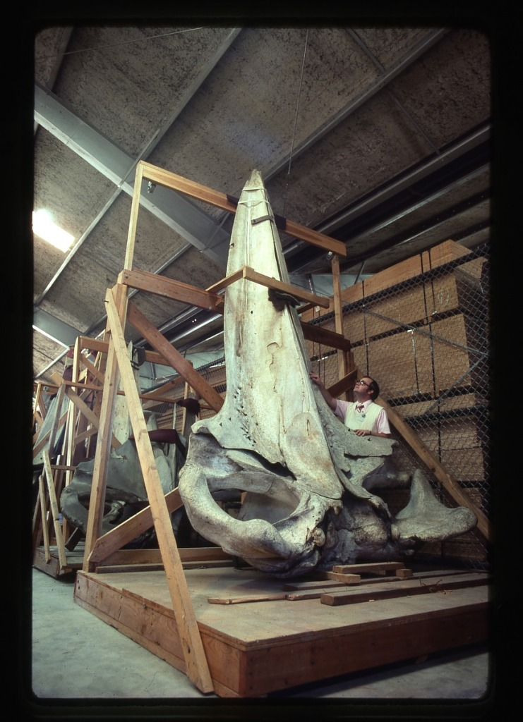 image for Frank Greenwell with Whale Skull
