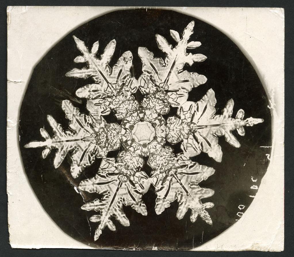 image for Wilson Bentley's Snowflake 990, c. 1890