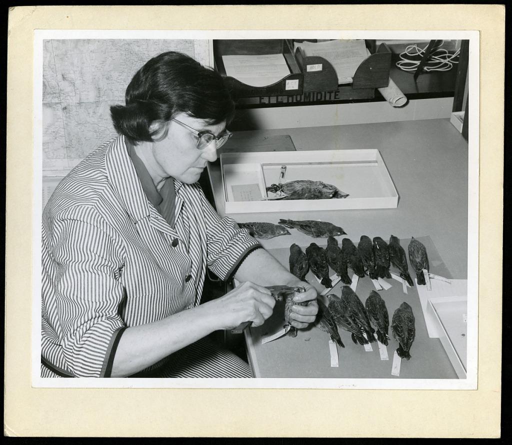 image for Roxie Laybourne Measuring Bird Beaks