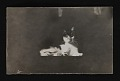 View Photograph of cat, pet of Paul Bransom, used in illustrations digital asset number 0