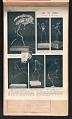 View Alexander Calder scrapbook of press clippings digital asset: page 16