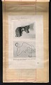 View Alexander Calder scrapbook of press clippings digital asset: page 45