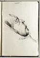 View Sketchbook of Ramón Carulla 1980 digital asset: sketch 39