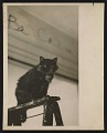 View Photograph of Jay DeFeo's cat, Pooh, in her studio digital asset number 0