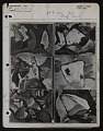 View Notes on reproductions and exhibitions of <em>Abstractions</em> numbers 1 through 6 by Arthur Dove digital asset number 0