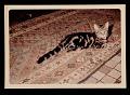 View Photograph of Elsie Driggs' cat digital asset number 0