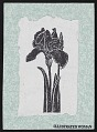 View Postcard featuring lithograph of iris digital asset number 0