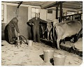 View Rockwell Kent in his dairy barn at Asgaar Farm digital asset number 0