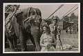 View Barnum & Bailey Circus performers and a show elephant digital asset number 0