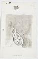 View Sketchbook No. 27 digital asset: sketch 20