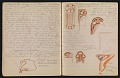 View An unidentified design student's notebook digital asset: pages 33